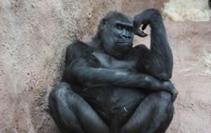 Animais fazendo pose de humanos: fotos