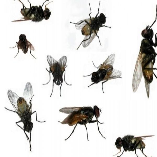 Dicas para espantar moscas - Como espantar moscas ...