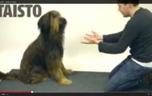 Vídeo mostra a reação de cães a truques de mágica