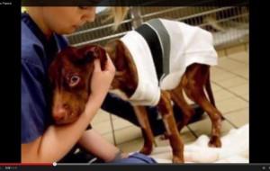 Cão encontrado em saco de lixo é recuperado e vira exemplo de superação