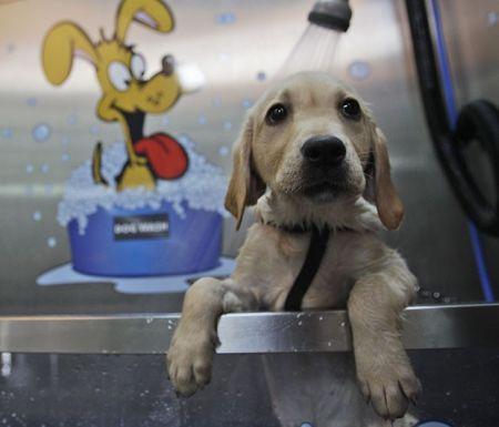 Xampu para cães: saiba o produto ideal para seu pet