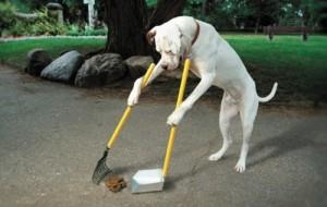 Limpeza dos pets pode impactar na vida dos donos