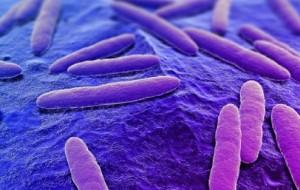 Vacina contra bactéria resistente promete salvar muitas vidas
