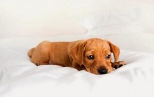 Aprenda a escolher a ração certa para o seu cachorro