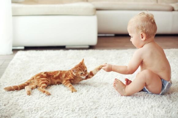 Mitos e verdade sobre animais de estimação