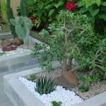 93172 jardim de inverno 4 150x150 Jardim de Inverno Fotos
