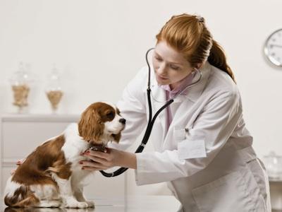 95796 faculdadesmedicina veterinaria sp 1 Faculdades de Medicina Veterinária em SP
