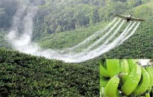 Elimine o Agrotóxico dos Alimentos!