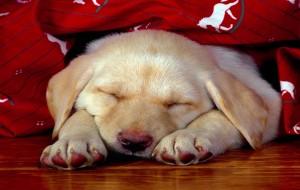 Pet Shop: Cuidados Com Animais