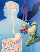 equilibriofloraintestinal Dicas para Melhorar a Flora Intestinal