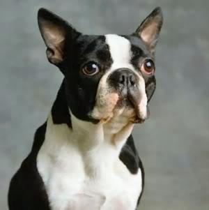 fotosdecachorrosderaa Fotos de cachorros de raça
