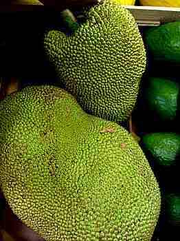 jaca  Jaca: Fruta Rica em Saúde