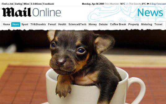 menorco Menor cão do mundo cabe dentro de uma xícara