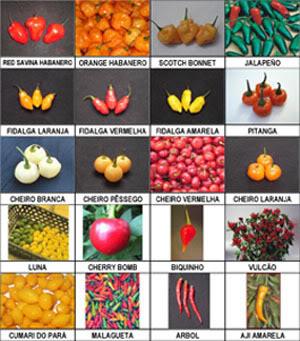 pimentasseusbeneficios Conheça os Benefícios da Pimenta