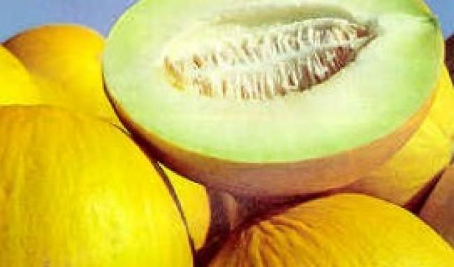melao Beneficios das Frutas