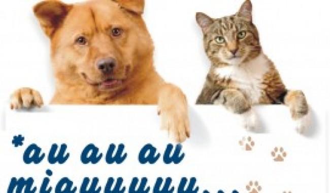 cuidados com seus animais Faculdade de Medicina Veterinária