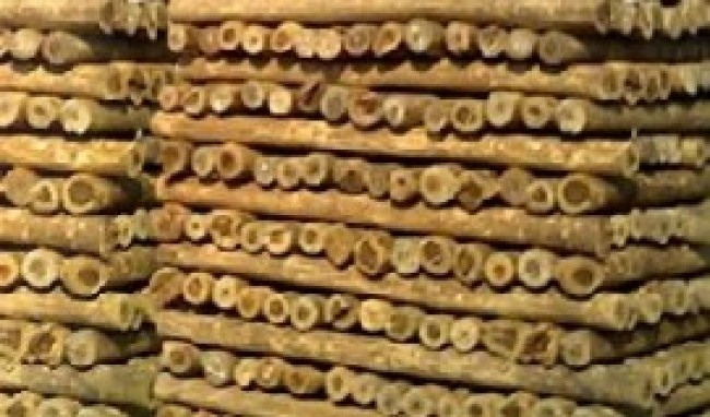 eucalipto tratado foto 1 Eucalipto Tratado: Preço
