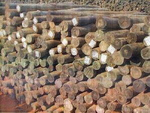 palanque de eucalitpto em auto clave Eucalipto Tratado: Preço