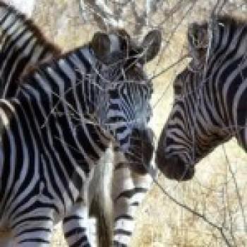 Fotos dos Animais da africa Fotos dos Animais da África