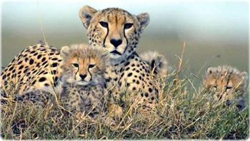 Fotos dos Animais da africa1 Fotos dos Animais da África
