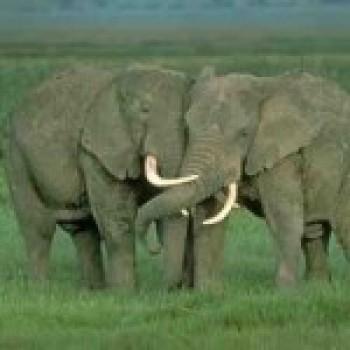 Fotos dos Animais da africa2 Fotos dos Animais da África