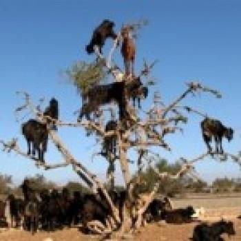 Fotos dos Animais da africa3 Fotos dos Animais da África