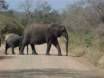 Fotos dos Animais da africa4 Fotos dos Animais da África