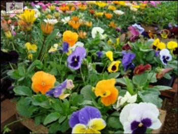 Fotos de Jardins de Flores1 Fotos de Jardins de Flores