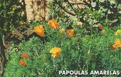 Flores para Paisagismo de Jardim Flores para Paisagismo de Jardim