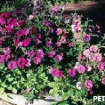 Flores para Paisagismo de Jardim1 Flores para Paisagismo de Jardim