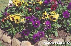 Flores para Paisagismo de Jardim2 Flores para Paisagismo de Jardim
