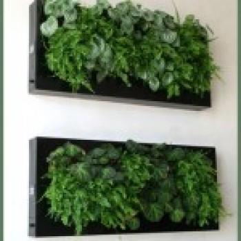 Jardim Vertical Quadro Vivo de Plantas Para Paredes 1 Jardim Vertical Quadro Vivo de Plantas Para Paredes
