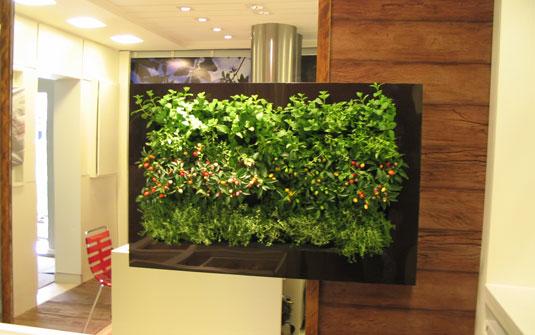 plantas para um jardim vertical de Plantas Para Paredes Jardim