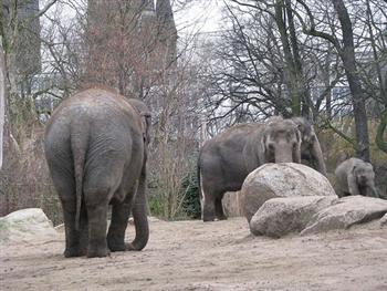 Melhores Zoologicos Para Conhecer nas Ferias Melhores Zoológicos Para Conhecer nas Férias