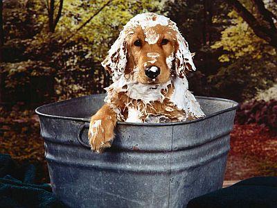 Shampoo para Cachorros Onde Comprar Shampoo para Cão Shampoo para Cachorros, Onde Comprar Shampoo para Cão
