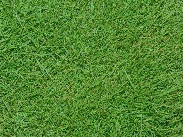 tipos de grama para jardim 300×225 Tipos de grama para jardim Dicas e