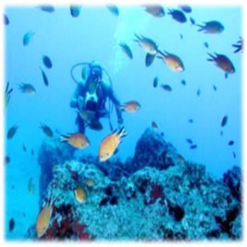 Mergulho em Ilhabela SP Pontos Para Mergulho em IlhaBela Mergulho em Ilhabela SP, Pontos Para Mergulho em Ilha Bela