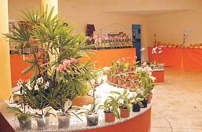 curso de cultivo de orquideas gratis Curso de Cultivo de Orquídeas Grátis
