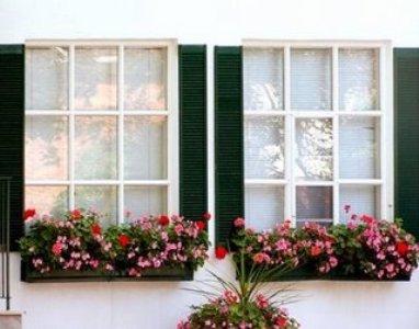 decoração de janelas com plantas Decoração De Janelas Com Plantas