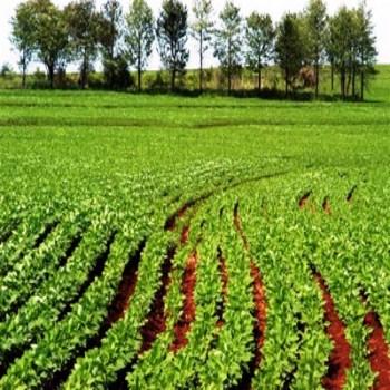 Curso de Agronomia Faculdades em Agronomia Onde Estudar Curso de Agronomia, Faculdades em Agronomia Onde Estudar