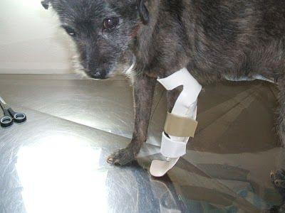 Proteses para Cães Onde Comprar Próteses para Cães, Onde Comprar