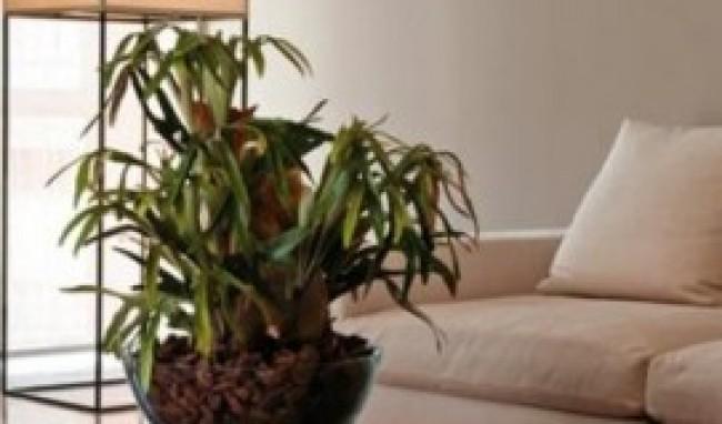 decoração de salas com plantas fotos 5 Decoração De Salas Com Plantas, Fotos