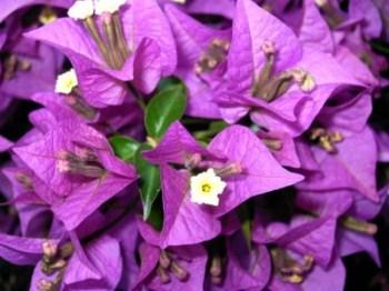 Venda de Plantas Ornamentais SP Precos e Orcamento Venda de Plantas Ornamentais SP Preços e Orçamento