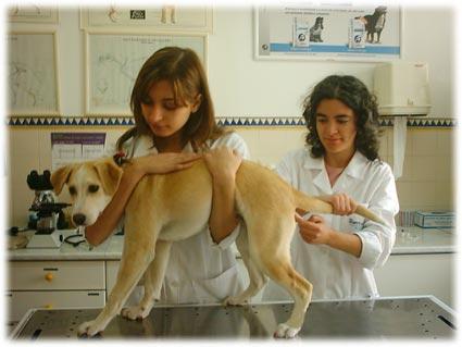 Graduação em medicina veterinaria preços faculdades 300x225
