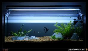 como montar um aquario dicas Como Montar um Aquário, Dicas