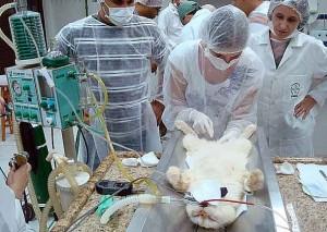 Anestesiologia 300x213 Curso de Anestesia Veterinária