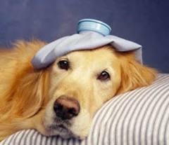 atendimento gratuito veterinario1 Atendimento Gratuito Veterinario