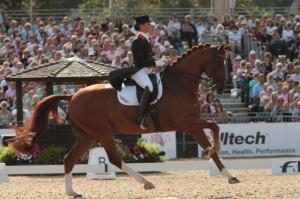curso adestramento cavalos 03 300x199 Curso de Adestramento de Cavalos