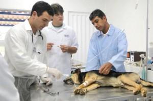 curso de anestesia veterinária 300x197 Curso de Anestesia Veterinária