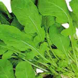 folha2 Benefícios das Folhas Verdes